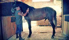 Cuidando do cavalo garanhão
